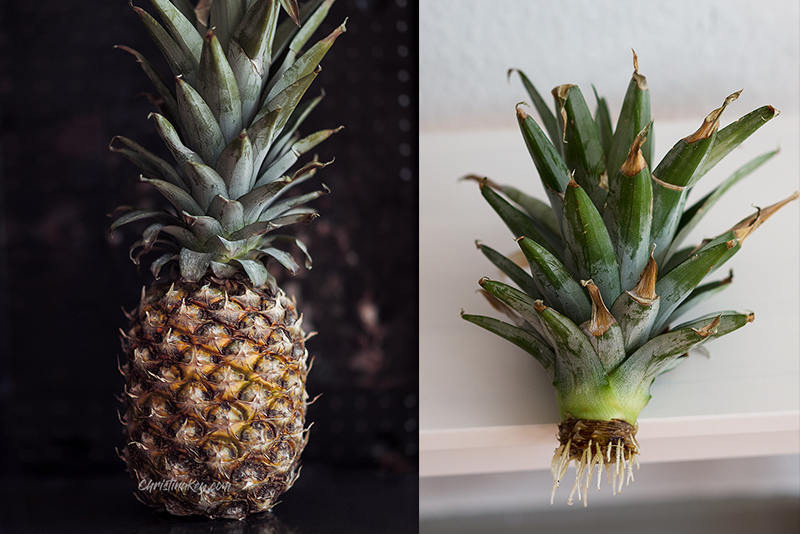 Ananas vermehren Tipp