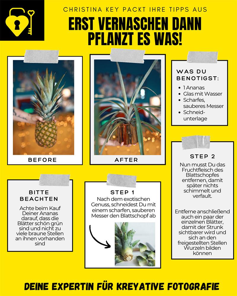 Ananas-vermehren