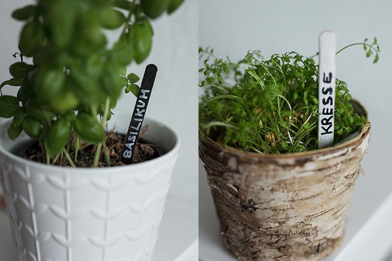 DIY Pflanzenschilder selber machen