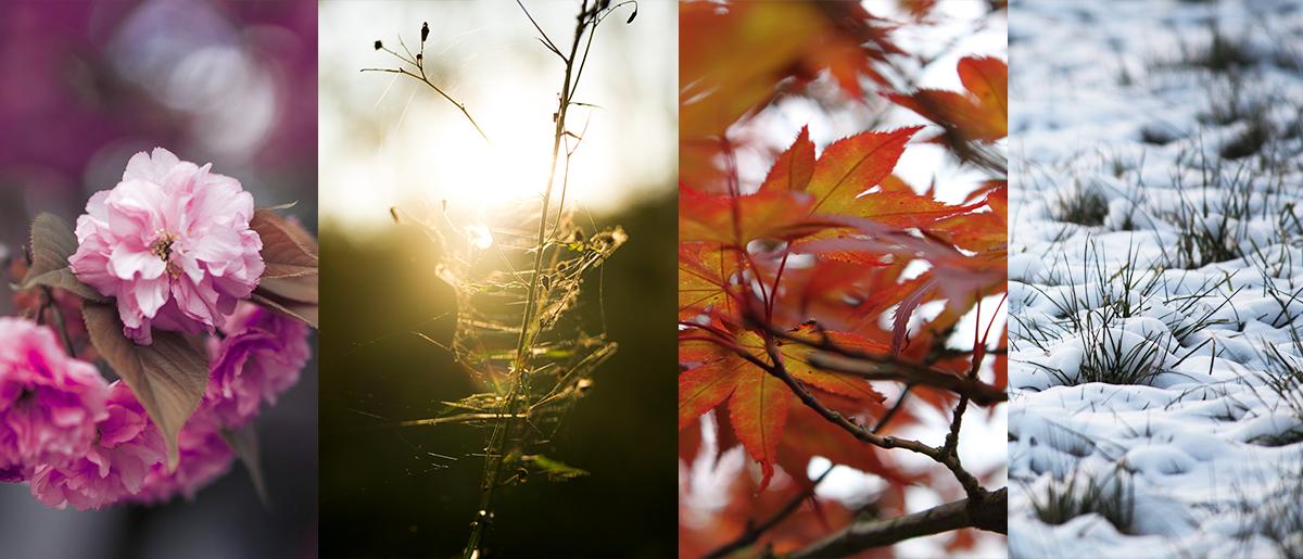 Perfekte Foto Location finden Jahreszeit