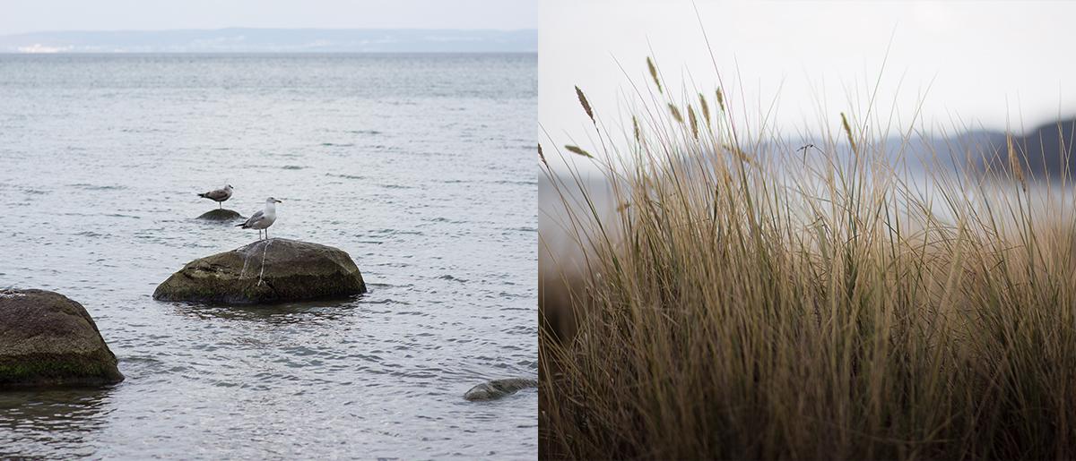 Rügen Ostsee Tipps Unberührte Natur