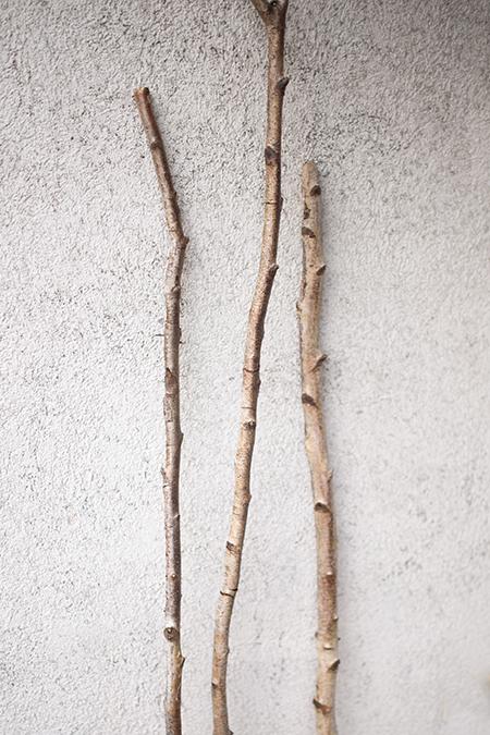 DIY Rankhilfe Birken Stamm