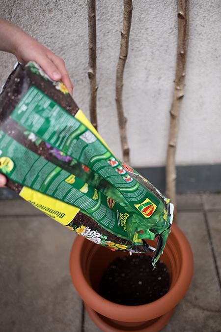 DIY Rankhilfe Blumenerde einfüllen