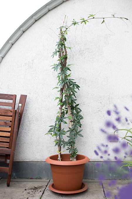 DIY Rankhilfe für Balkon