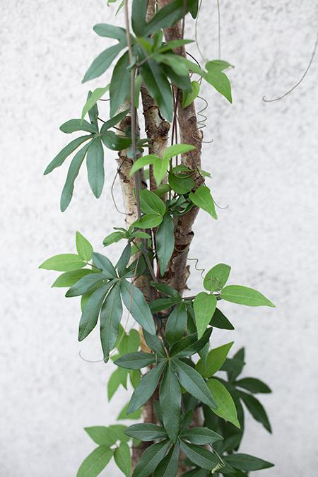 DIY Rankhilfe mit Clematis Pflanze