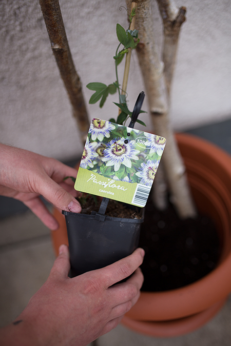 DIY Rankhilfe mit Passionsblume