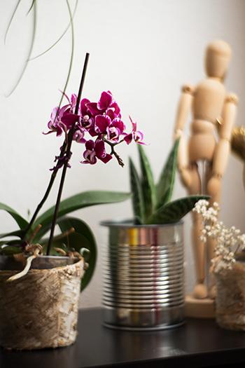 Orchideen Pflege Tipps Übersicht