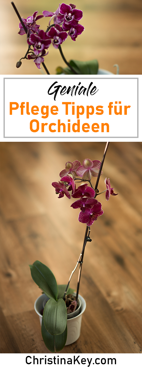 orchideen pflege tipps kreative fotografie hacks foto. Black Bedroom Furniture Sets. Home Design Ideas