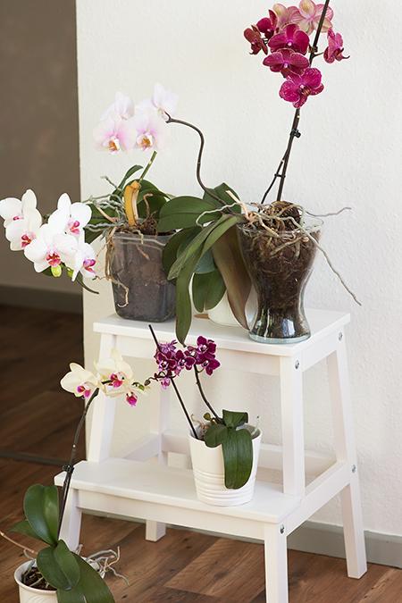 Orchideen Pflege Tipps Blühen