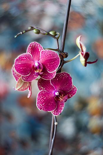 Orchideen Pflege Tipps Dünger und Umtopfen