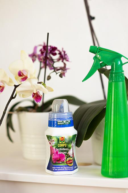 Orchideen Pflege Tipps Dünger