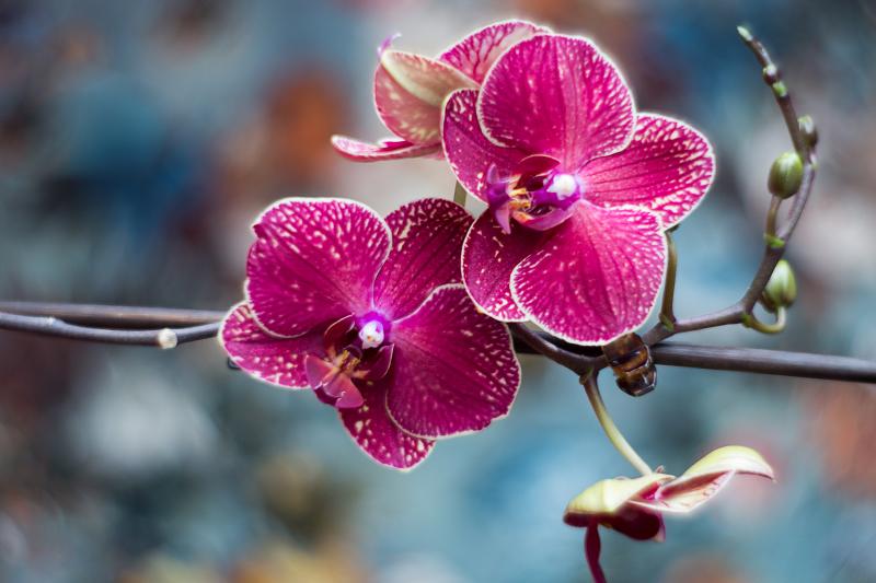 Orchideen Pflege Tipps einfach