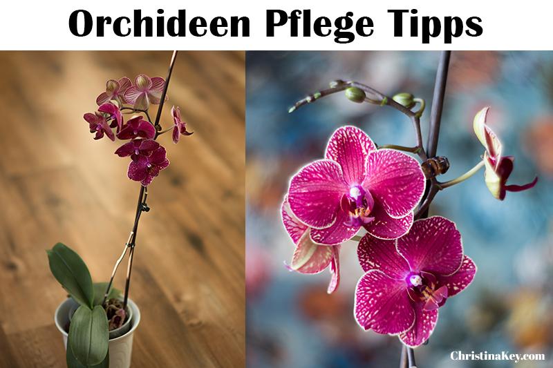 orchideen pflege tipps kreative fotografie hacks foto. Black Bedroom Furniture Sets. Home Design Ideas