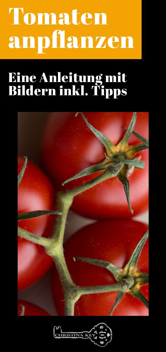 Tomaten anpflanzen Anleitung und Tipps