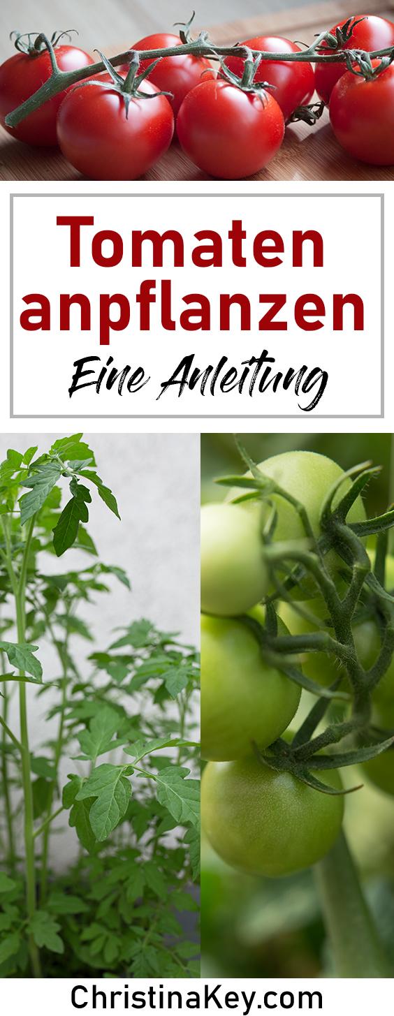 Tomaten anpflanzen Anleitung