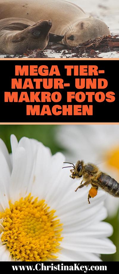 Natur Fotografie Tipps Makro und Tier Fotos