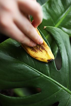 Dünger aus Bananenschalen Pflanzenpflege